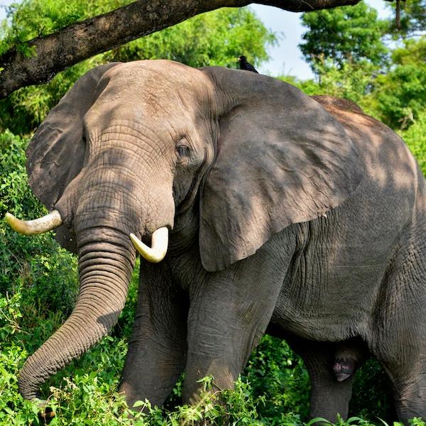Uganda Wildlife Tour to Queen Elizabeth National Park