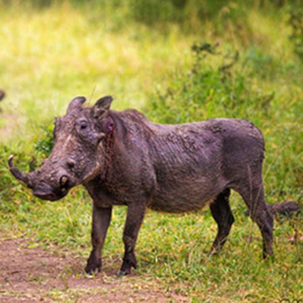 10 Days Uganda Wildlife Adventure