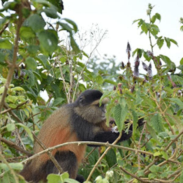 3 Days hiking of Mgahinga mountain and gorilla national park