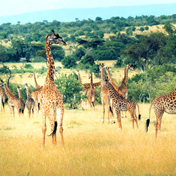 3 Days Wildlife safari tour of  masai mara