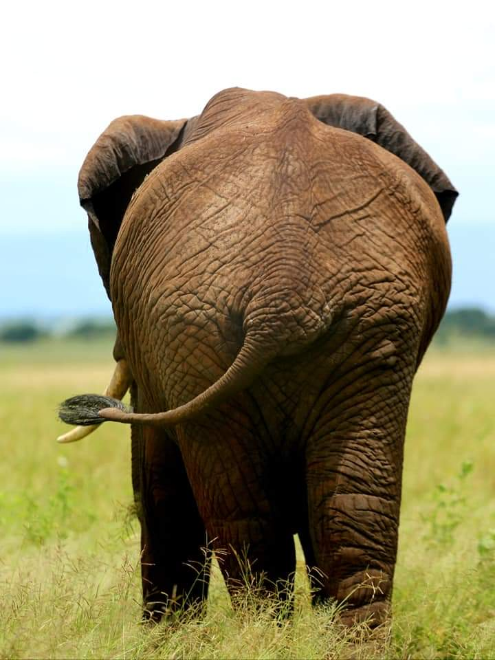 14 day best of East Africa safari, wildlife, gorillas, Kenya, Tanzania, Rwanda