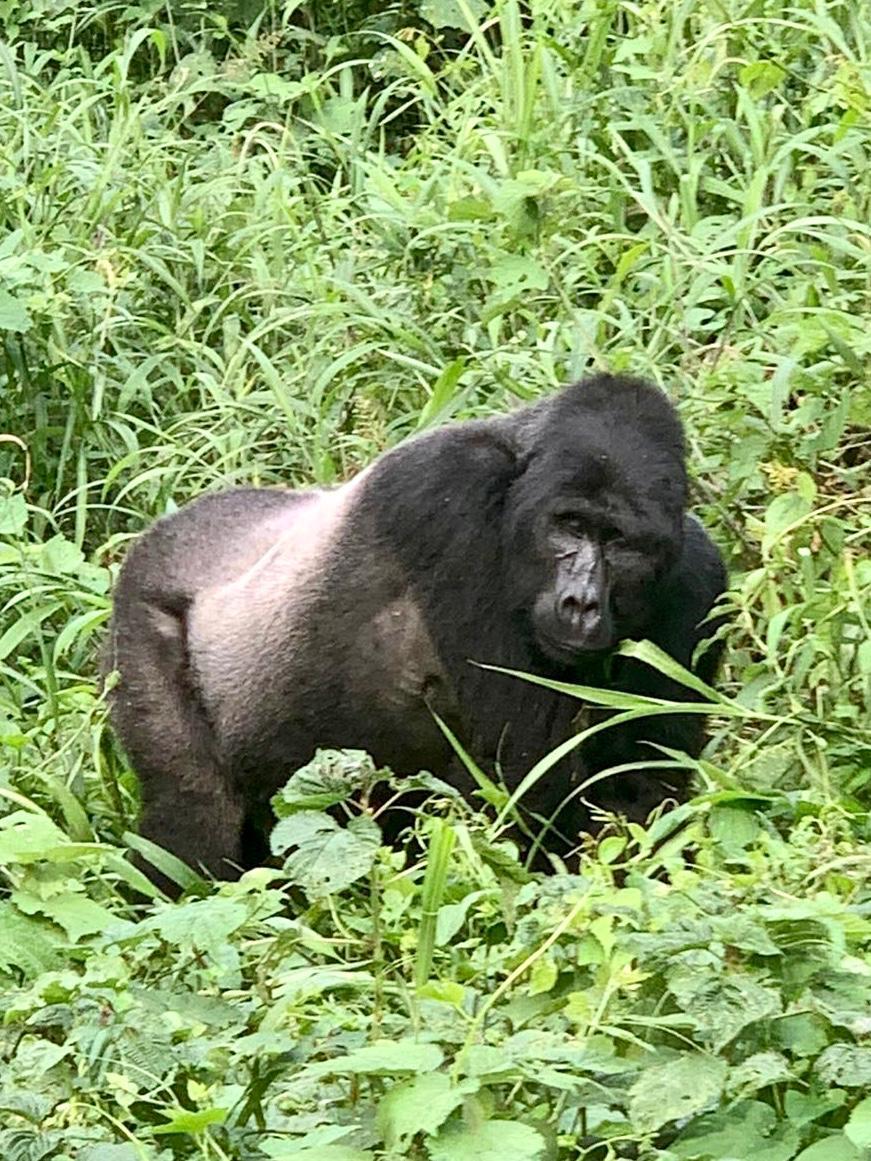 5 Day Rwanda Gorilla Safari and Cultural Tour