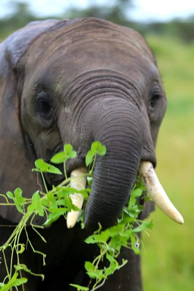 5 days Tanzania Amazing Safari