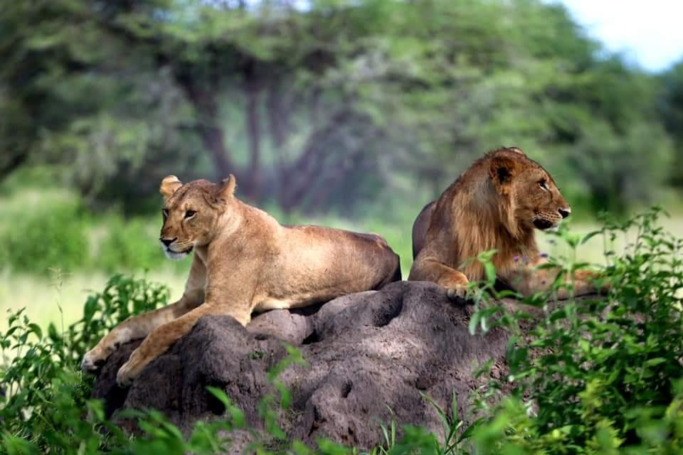 10 Days East Africa Safari Tanzania Uganda