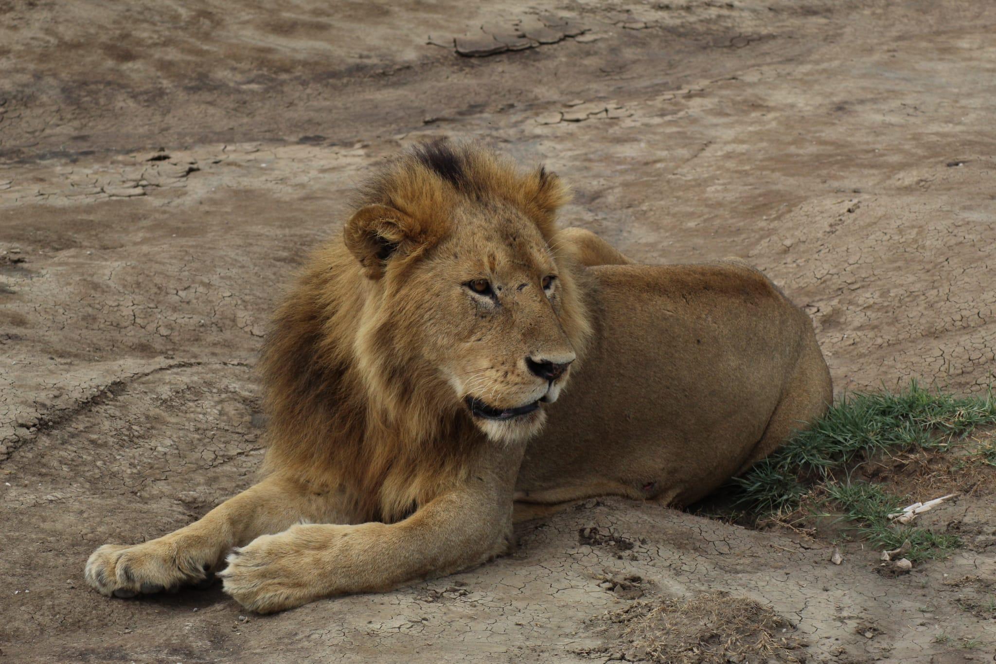 4 Day Serengeti Wildlife Safari