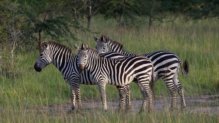 A visit to Lake Mburo National Park