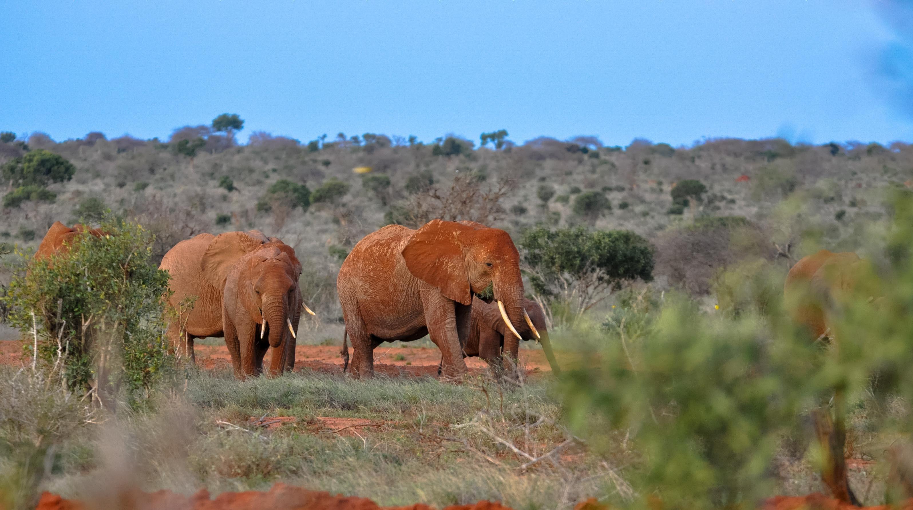 4 Day Wildlife Adventure to Tsavo East Tsavo West Amboseli National Park   Kenya wildlife Safari   Kenya adventure tours   Best Kenya Safari